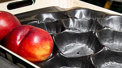 Alvéoles en plastique pour fruits