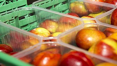 Barquettes fruits et légumes