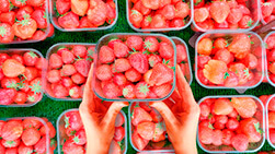 Envasado de frutas y verduras