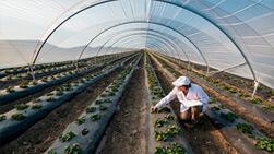 Mallas y otros productos para cultivo