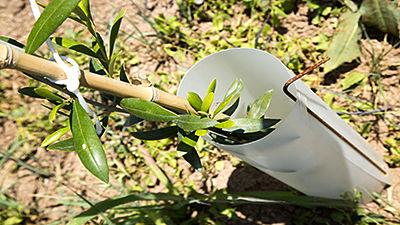 Protège-arbres individuel avec tige