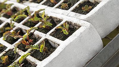 Bacs à semis en porex