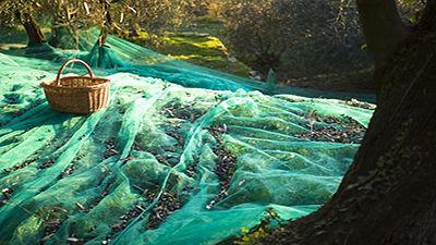Filet de récolte des olives et des amandes