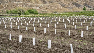 Protège-arbres en bandes plastiques souples